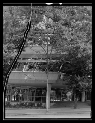 Artificially straightened tree outside tall building in Vancouver. Silver gelatin print by Daniel Temkin