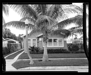 Artificially straightened palm tree in front of suburban bungalow on Santa Lucia Dr