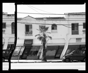 Artificially straightened tree in front of storefront on W. Pico
